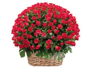 100 red roses basket